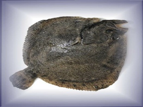 Click here to see a larger picture if this turbot